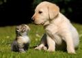 Comportamento animale