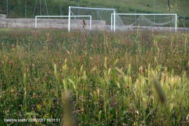 Colonnella, il campo sportivo abbandonato e pieno di erbacce