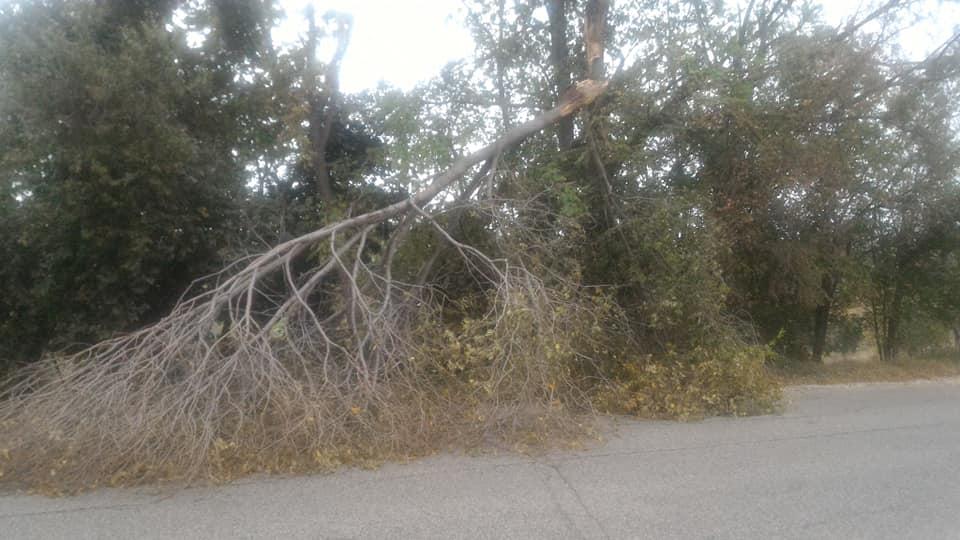 Maltempo Nereto, cade ramo sulla strada provinciale
