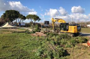 pini abbattutti statale 259 colonnella martinsicuro