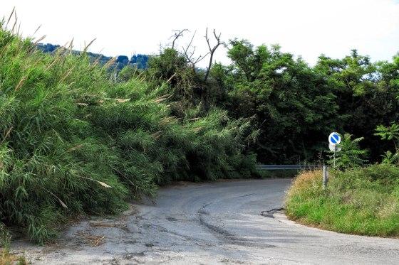 Colonnella, il disastro delle strade provinciali: la denuncia FOTO