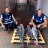 Giulianova, sequestro di prodotti ittici. Sanzionato un peschereccio