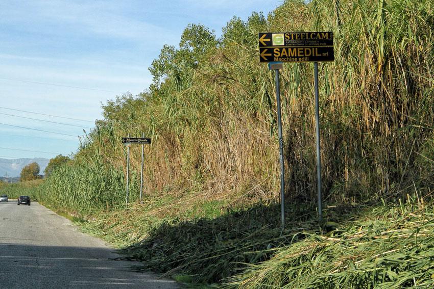 """Colonnella, vegetazione copre i segnali stradali: tagli """"fai da te"""""""