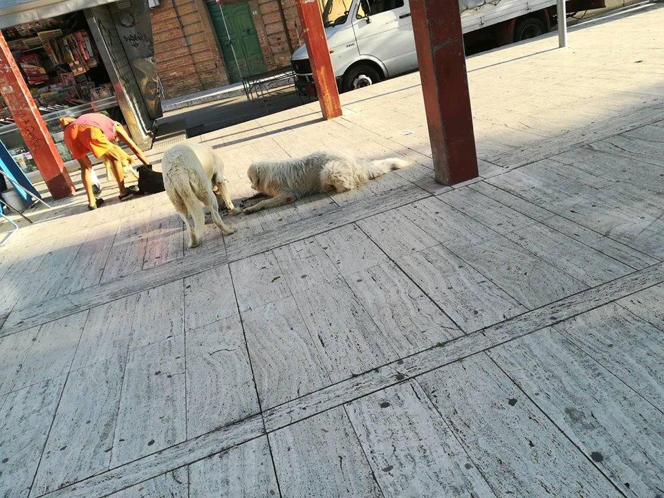 Cani abbandonati a Sant'Egidio, i privati si fanno avanti