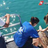 Guardia costiera Giulianova: rilasciati in mare due esemplari di tartarughe